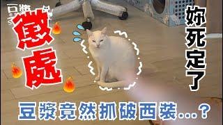 【豆漿 - SoybeanMilk】不懲罰妳... 妳真的會越來越誇張!!