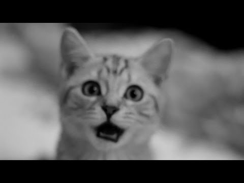 Vote For Infected Mushroom - DJ Mag 2012 - Mazarini´s Cat singing