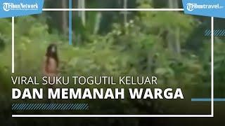 VIRAL! Video Suku Togutil Mendadak Muncul dan Memanah Warga Setempat, Terkenal jarang Terekspos