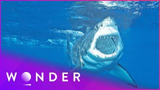 This Man Survived A Shark Attack | Human Prey S1 EP2 | Wonder