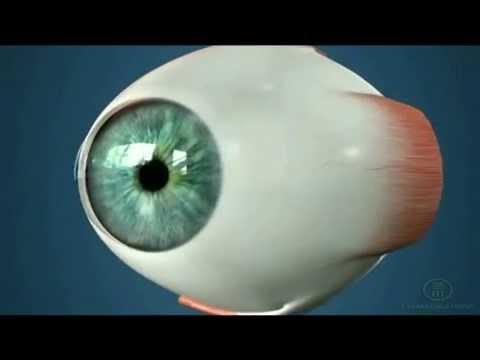 Теория бейтса восстановление зрения видео