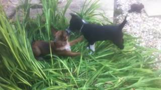 puppies rona and rex meet... sooo cute!!