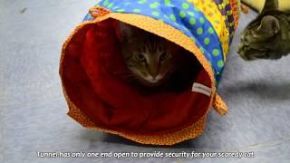 Petstages (Петстейджес) Cat Cuddle Toy Кошачий тоннель для кошек