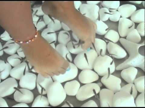 Das Kindermittel von gribka auf den Nägeln der Beine