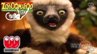 Zoboomafoo Episodes The Four Fs Zoboomafoo Kratt Brothers