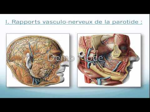 Le diagnostic différentiel de la varice variqueuse des membres inférieurs