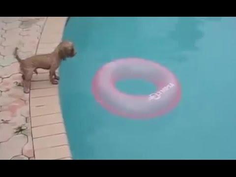 Смешные собаки. Собаки падают в воду подборка