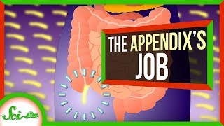 Your Appendix Isn't Useless, After All