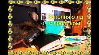 Заполняю личный дневник с кроликом   Кролик управляет моим лд