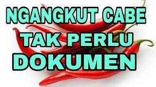 Mengangkut lombok, haruskah ada dokumen ? #uullaj #hukum