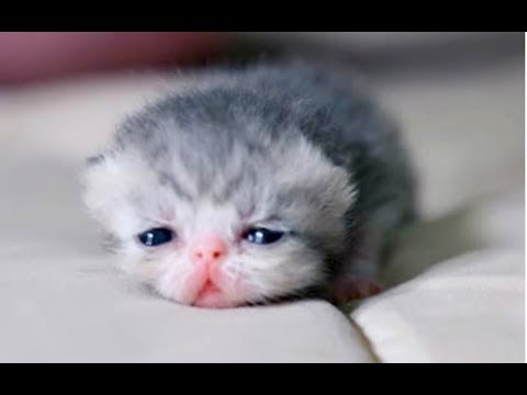 JUST WATCH These Cute Baby Animals - Cute Animal Babies Videos 2017