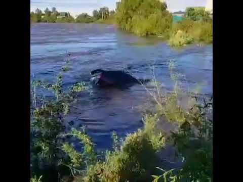 Житель Читы едва не утонул пытаясь спасти свой автомобиль