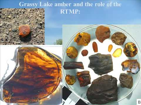 Canadian Amber: A Snapshot of a Late Cretaceous Forest and its Inhabitants