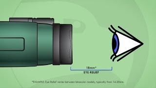 Understanding Binoculars: Eye Relief