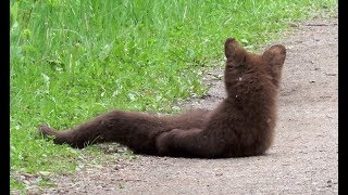 Slough Creek Bear Watching - Yellowstone National Park