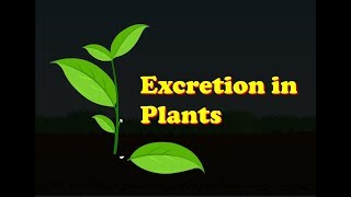 Biology - Excretion in Plants