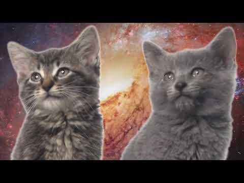 Песня мяу, мяу  - часовая версия | Space Cats 1 hour version