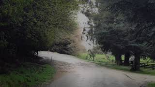 Soft Rain Sounds In Countryside 10 Hours, Sound Of Rain To Relax, Sleep, Study, Beat Insomnia