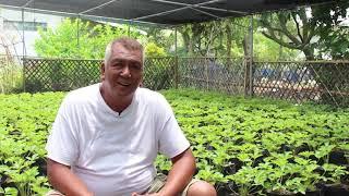 MANa: Strawberry Farm ng Central Luzon | Episode 6 Season 2