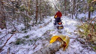 Czy mogę ciągnąć 24-stopową kłodę moim Skidoo | Jazda na nartach z moją córką | Ścinanie drzew do mojej chaty z bali