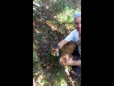 Lavaggio da gambe allatto di trattamento di un fungo di ununghia