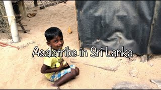 Asalatribe In Sri Lanka 🇱🇰