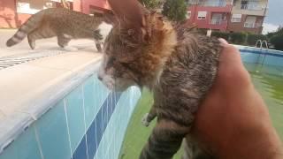 Paticik havuza düştü