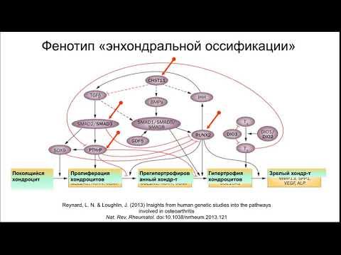 Остеоартроз Лекция часть 1