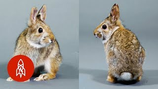 This Adorable Bunny Needs Our Help