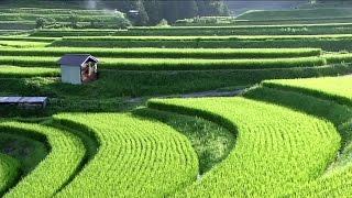 Satoyama Japan  The Secret Watergarden  Discovery English Subtitles