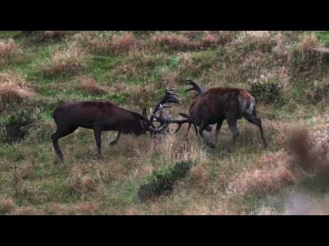 2019 The Choice – Show 7 – Leithen Valley Hunts – NZ Red Stags, part 1