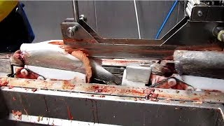 Amazing Automatic Fish Processing Line Machines Modern Technology - Big Catch in The Sea