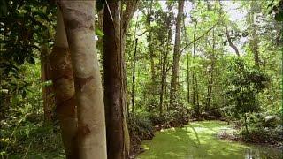 Thailande Sauvage - Un Ecosysteme Riche