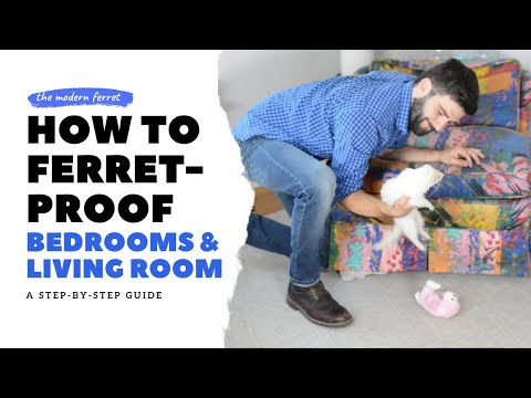 , title : 'How to FERRET PROOF Your Bedroom and Living Room | Ferret Care