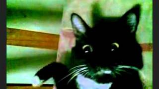 Dramatic Cat – 3