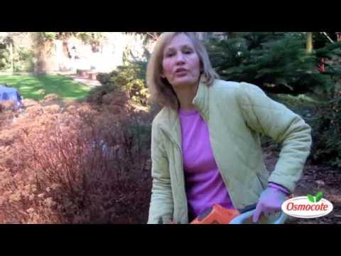 Knistern und Verletzungen der Halswirbelsäule