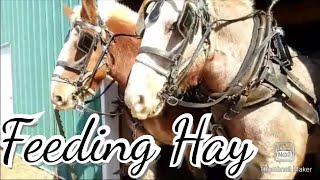 Using Draft Horses On A  Homemade Bale Mover