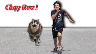 NTN - Thi Chạy Đua  Với Gấu ALaska (Racing with a alaska dog)