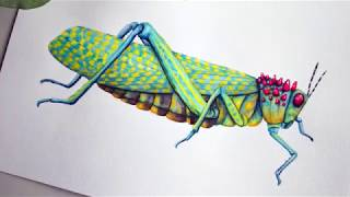 Watercolor Painting Of A Grasshopper - Phymateus Saxosus