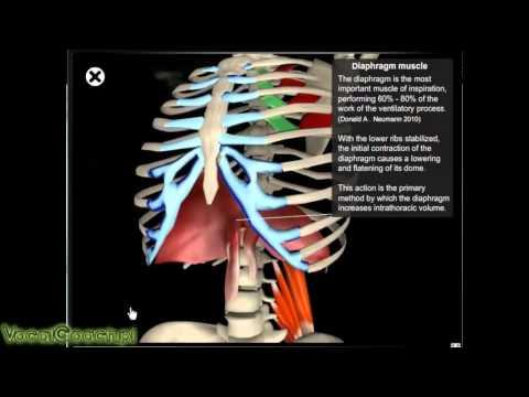 Niż do poprawy stanu mięśnia sercowego