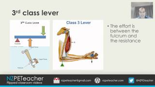 lever systems in the body