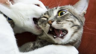 Funny Cats and Dogs Videos Compilation   pet 2020 fpv cat 2020 candid fails try not to laugh