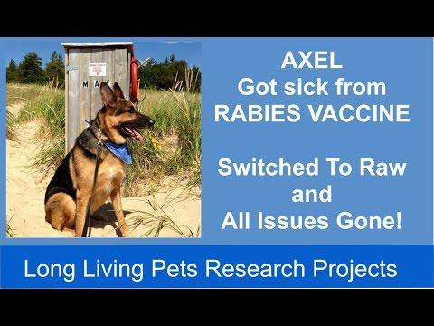 Rabies Vaccine Made Axel Sick