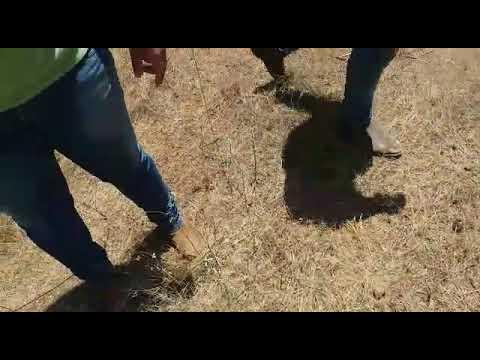 Após pegar carona, bandido tenta assaltar caminhoneiro e acaba morto