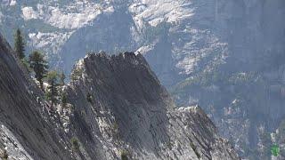Switzerlan's Giant tree remains