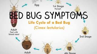 Beg Bug Symptoms - 5 Signs You Have Bed Bugs