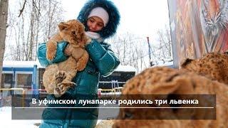 UTV. Новости севера Башкирии за 6 декабря (Нефтекамск, Дюртюли, Янаул)