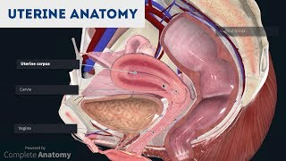 Anatomy of the Uterus | Ovaries | 3D Anatomy Tutorial
