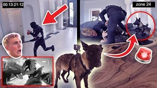 HOW WILL APOLLO REACT TO A BURGLARY?! **PUPPY EXPERIMENT**