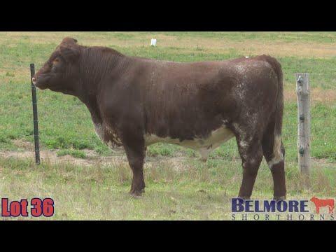 BELMORE OREGON Q224